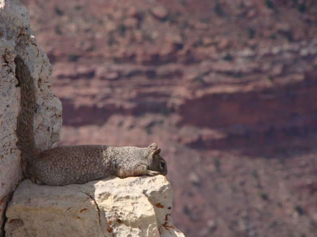 A squirrel at the Grand Canyon